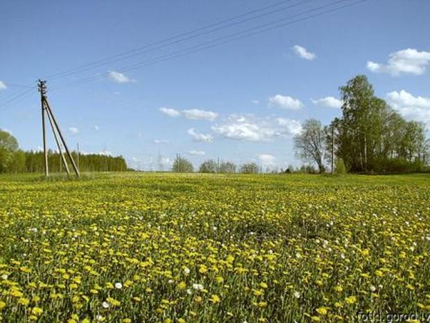 Навести порядок в земельных отношениях мешают плохие законы