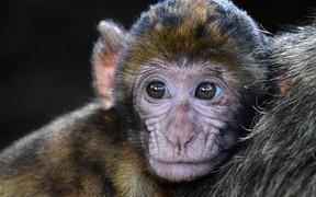 Новый скандал: Volkswagen ставил опыты на животных