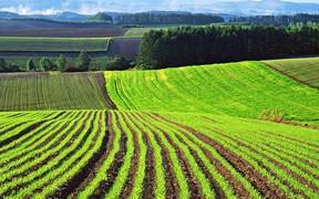 Почти 1 млн га с/х земель госорганов предлагают выставить в аренду