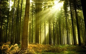 Президент подписал закон об инвентаризации лесов