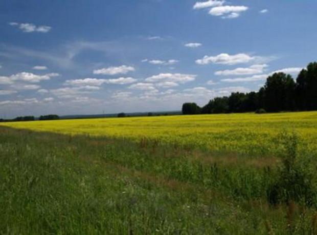 Продан земельный участок 5,2 га за 6,96 млн грн.