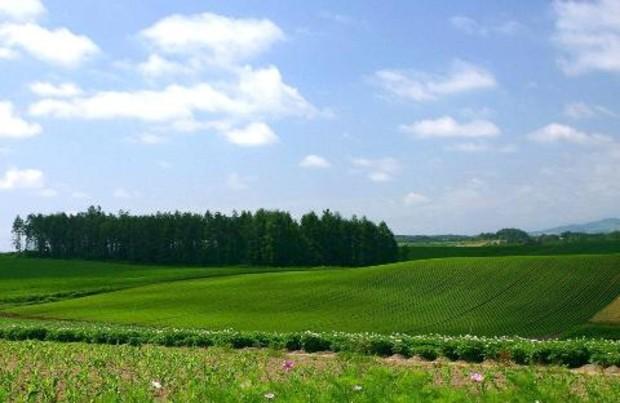 Продажи земли в Киевском регионе уменьшились на 2,8%