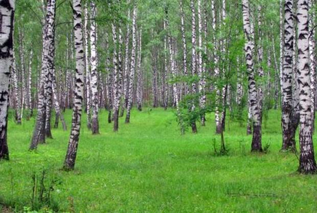 Рада откорректирует Земельный и Лесной кодексы