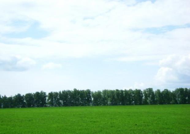 С начала года в Украине уничтожено 2,9 тыс. га земель с/х назначения и лесного фонда