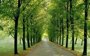 Штрафы за вырубку деревьев повысят в 10 раз