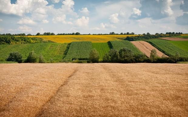 Теперь украинцы могут обменивать земельные участки