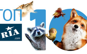 ТОП-10 экзотических домашних животных, которых можно купить в интернете