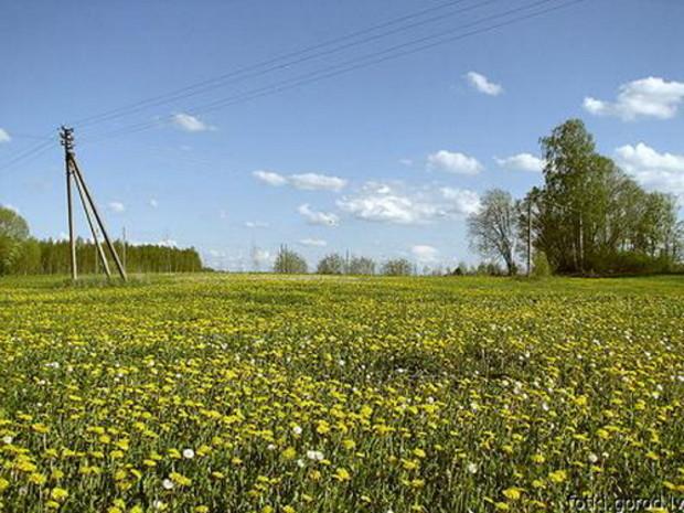 У Януковича намерены разрешить продажу сельхозземель в следующем году