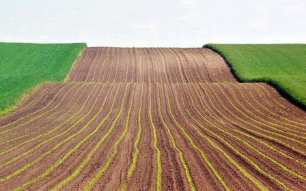 У земельной реформы в Украине 5 проблем – эксперт