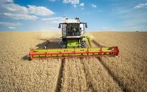 Уборка пшеницы комбайном Claas Lexion 760 в Новой Зеландии