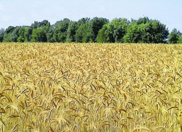 Украина имеет шансы стать мировым центром чистого земледелия