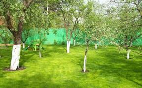 Украинцам ограничили места для высадки деревьев