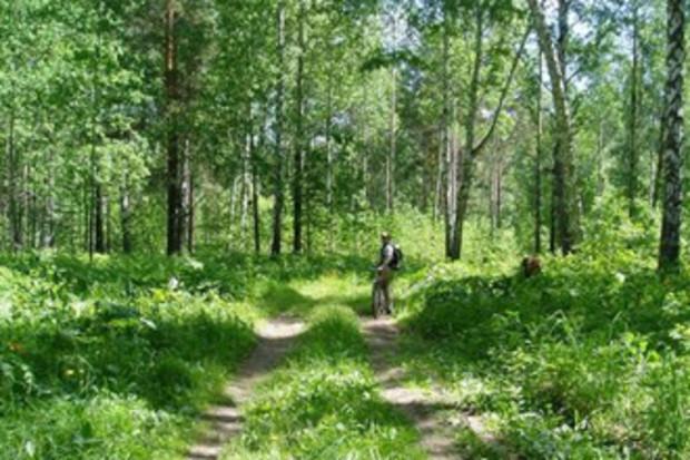 В 2011 проведут ревизию всех украинских лесов