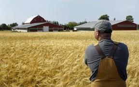 В госсобственности необходимо оставить 20% всех с/х земель (видео)