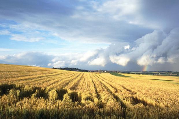 В «одни руки» будут давать 1,5 тыс. га сельхоз земли
