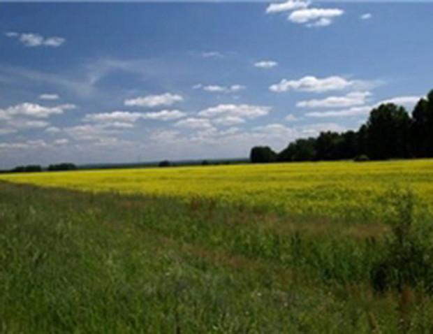 В Украине вступил в силу закон об упрощении порядка приобретения прав на землю