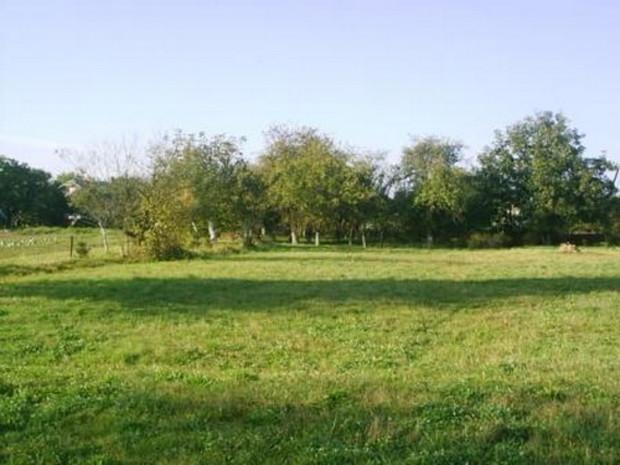 В Українi 2010 року розпродали пiвтори тисячi гектарiв