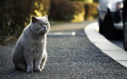 В Виннице котов сделают частью городской экосистемы