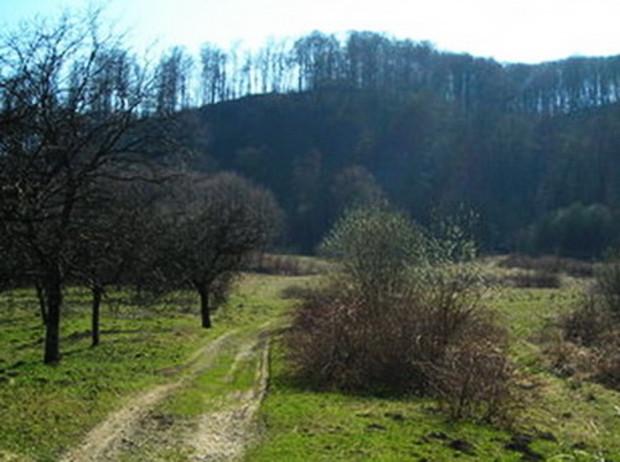 В Закарпатье увеличилось количество афер с землей