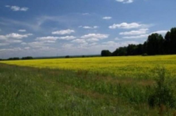 Верховная Рада снова запретила продажу сельхозземель