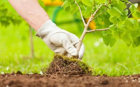 Весной киевлянам будут бесплатно раздавать саженцы для озеленения районов