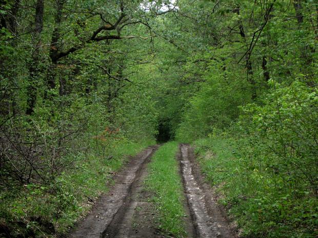 Во благо: приватизировать можно все, кроме леса