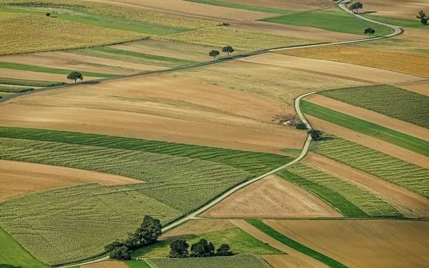 На Львівщині учасникам бойових дій виділили 7 339 земельних ділянок