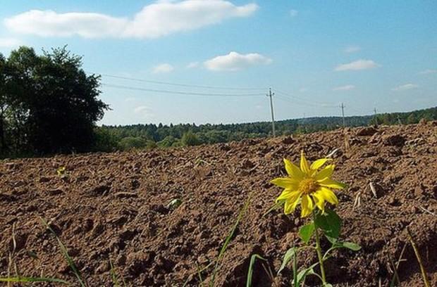 За месяц в Киевской области продано 1448 земельных участков