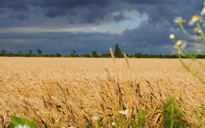 Закон о продаже земли примут не раньше 2020 года