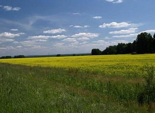 Законопроект «О рынке земли» вернулся в Кабмин