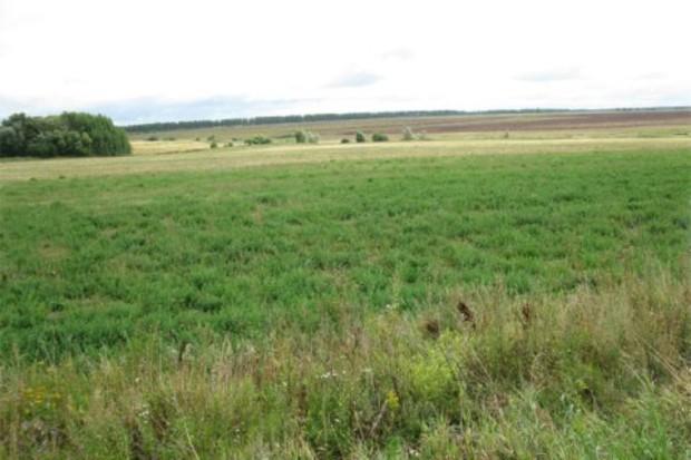 Земля в Киевской области подешевела на $19 за сотку