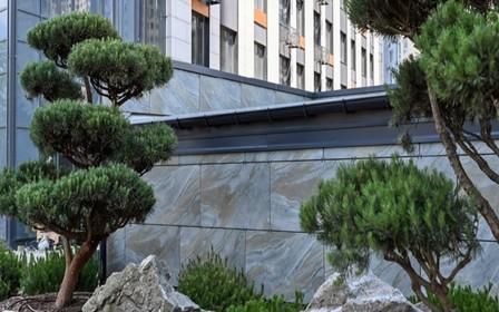 ЖК «Метрополис» обошел киевский ботанический сад по количеству пиний