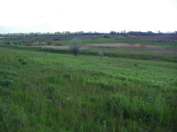 Донецкий губернатор инициирует масштабный земельный беспредел?