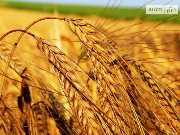 Катар может купить в Украине землю для выращивания зерновых