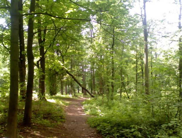 Киев потерял 700 гектаров леса