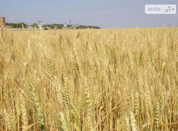 Рыночная цена сельхозземли в Украине - 1800-2000 долл. за гектар