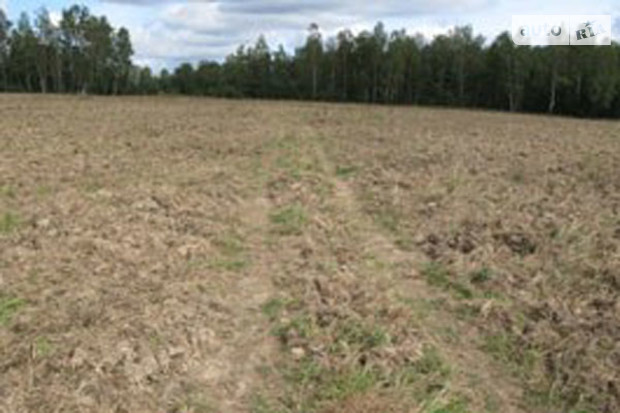 Сына украинского министра уволят за земельные махинации
